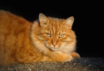 Portrait of a cat lying at a concrete fence.