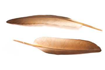 Feathers isolated on white background