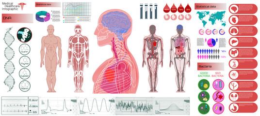 Human Anatomy, Body With Internal Organs. Medical Infographic Set. Illustration of Heart Scan, Human Body, Electrocardiogram, DNA, Arteries and Bervous System. Medical Infographic Vector Illustration