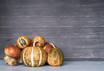 Big and mini pumpkins stacked to left on wooden background, copy space. Photo toned style Instagram filters.