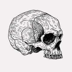 Vector hand drawn vintage skull illustration. Graphic sketch for posters, tattoo, clothes, t-shirt design, pins, patches, badges, stickers.