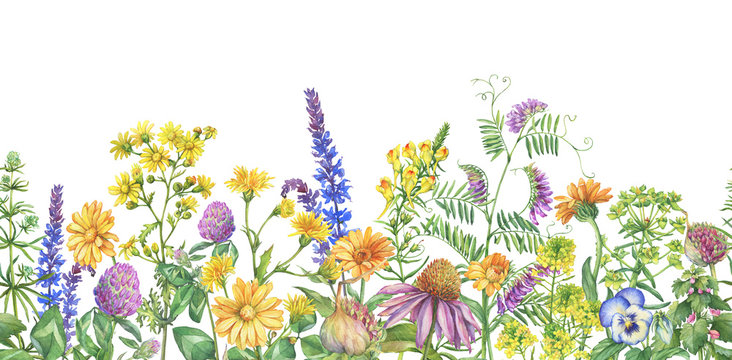 Frame, border with flowering wildflowers, medicinal herbs. Watercolor hand drawn painting illustration isolated on a white background.
