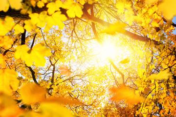 Sonnenschein im goldenen Herbst