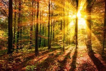 Wall Mural - Licht- und Schattenspiel im Wald zu Herbstzeit