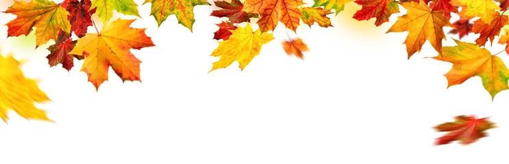 Herbst Rahmen mit bunten Ahornblättern auf weiß, Panorama Format