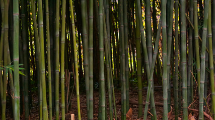 Beautiful column of Japanese bamboo
