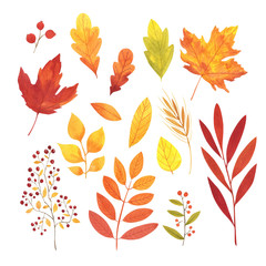 Watercolor autumn leaves set. Hand painted illustration.