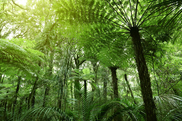 Jungle tree ferns