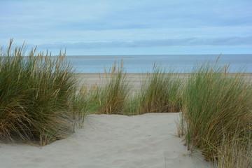 Printed roller blinds Landscapes Strandhafer in den Dünen mit viel Sand und blauem Himmel, an der Nordsee in den Niederlanden