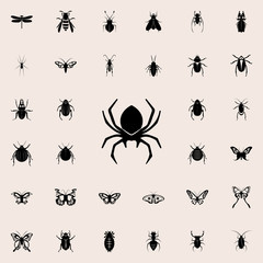 spider icon. insect icons universal set for web and mobile