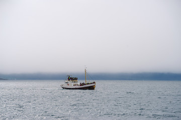 Whale watching in Old Oak Boat at sea