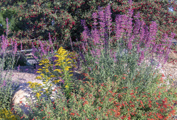 Colorful Late Summer Garden Flowers