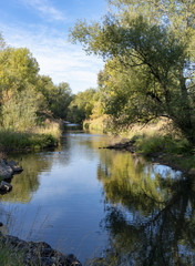 Cottonwood Trees along Creek in Fall with Reflections