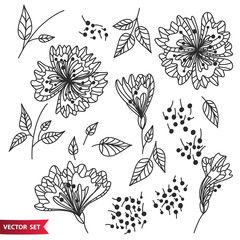 Vector set of hand drawing wild plants, herbs and flowers, monochrome artistic botanical illustration, isolated floral elements, hand drawn illustration.