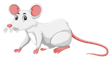 A white rat on white background