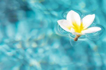 Spoed Fotobehang Frangipani Flower of plumeria floating in the turquoise water surface. Water fluctuations copy-space. Spa concept background