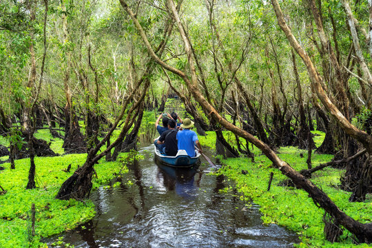 traveler sightseeing over the traditional  boat in tra su forest, Mekong Delta travel, vietnam