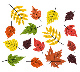 Autum season design. Leaves hand drawn vector set illustration. Isolated on white background.