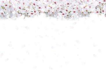 桜の背景(白と薄いピンクのイメージ)