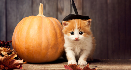 halloween pumpkin jack-o-lantern and ginger kitten on black wood background