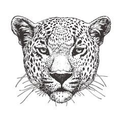 Portrait of Leopard, hand-drawn illustration, vector