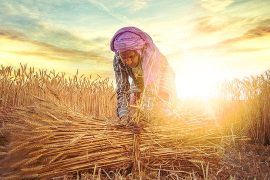 woman making bundles of wheat
