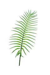 Green tropical palm leaves isolated on white background.