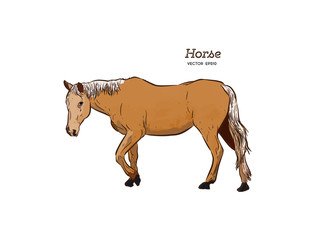 Horse, Hand draw sketch vector.