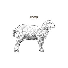 Sheep sketch style.