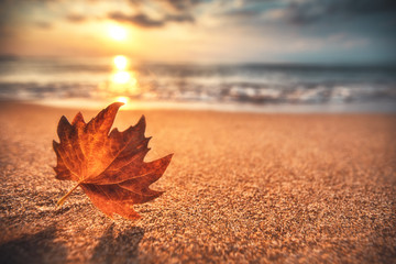 Foto auf Acrylglas Herbst Autumn leaf on the sand. Beautiful cloudscape over the sea, sunrise shot