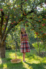 Beautiful girl in an apple orchard. A child tears apples from a tree. Picking apples. An apple in the hands of a girl