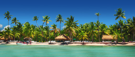 Obraz Panoramic view of Exotic Palm trees on the tropical beach. - fototapety do salonu