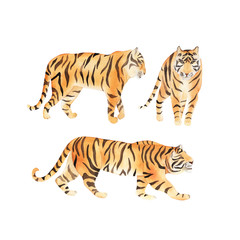 Watercolor set with tiger. Summer decoration print for wrapping, wallpaper, fabric. Watercolour