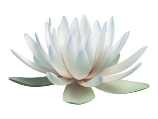 Lotus flower isolated on white. Vector illustration