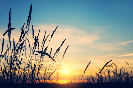Evening bright landscape with tall grass against the backdrop of the setting sun