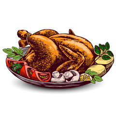 Roasted turkey, chicken,with ingredients hand drawn vector illustration sketch