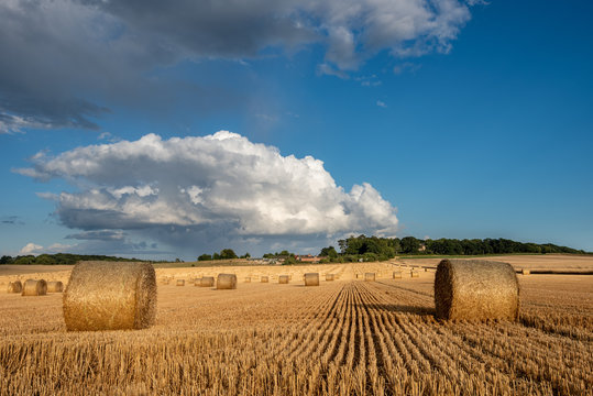 Farming scene, after the harvest with multiple round straw bales in field with clouds and blue sky