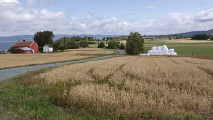 Missernte nach zu heißem Sommer, Getreidefelder