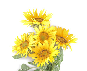 Bouquet of beautiful yellow sunflowers on a white isolated background