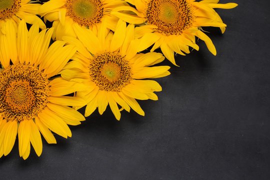 Beautiful yellow sunflowers close-up on a dark black background with a place for an inscription. top view