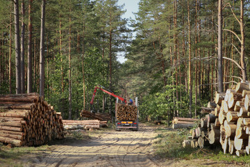 Timber harvesting and transportation in forest. Transport of forest logging industry, forestry industry.