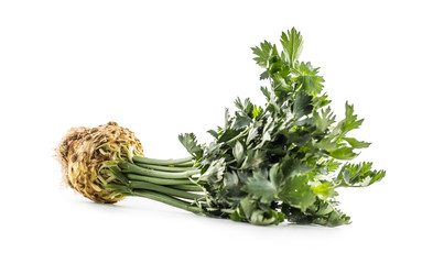 Ripe celery root from leaves isolated on white.