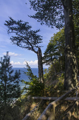 Widok nadmorski z klifu