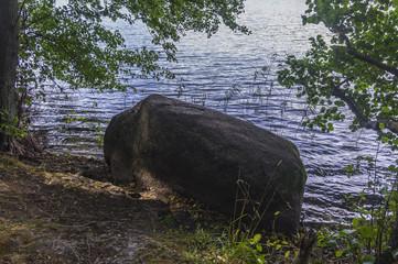 Dzki brzeg jeziora