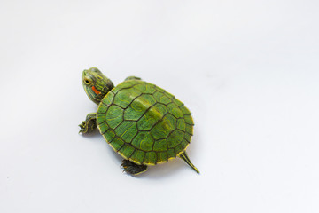 Fotorolgordijn Schildpad little half-sea turtle