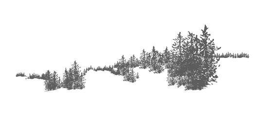 Wild coniferous forest landscape with hand drawn spruce, pine or fir trees growing on hills. Woodland panorama. Elegant monochrome decorative element isolated on white background. Vector illustration.