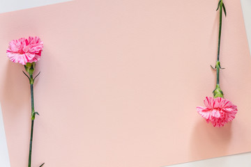Photo of a white background with pink pastel paper copy space with pink carnation flowers