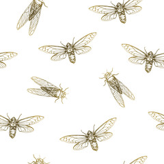 Vector illustration. Cicadas . Vector pen style sketch. Element of seamless pattern.