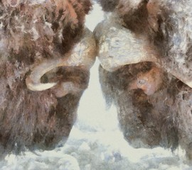 Oil painting. Art print for wall decor. Acrylic artwork. Big size poster. Watercolor drawing. Modern style fine art. Fight of two wild brown bison