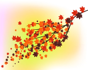 autumn,beautiful autumn leaves fly from the branches of the tree